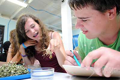 Camper examining a juvenile lobster during a lab at Seacamp