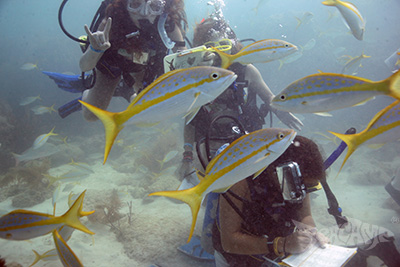 Yellowtail snapper surround a group of young scientists at Seacamp